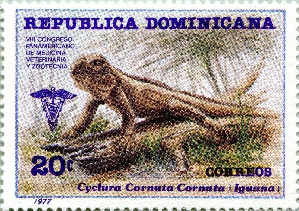 Iguana cornuda o iguana rinoceronte Cyclura cornuta