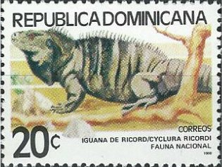 Iguana de Ricord (Ricordi)