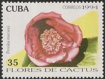 Sello de Cuba de1994 con la Pereskia marcanoi.