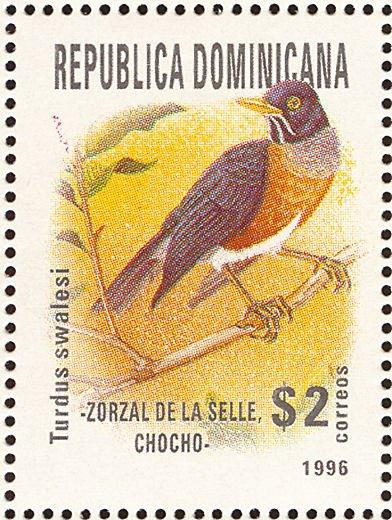 Zorzal de La Española