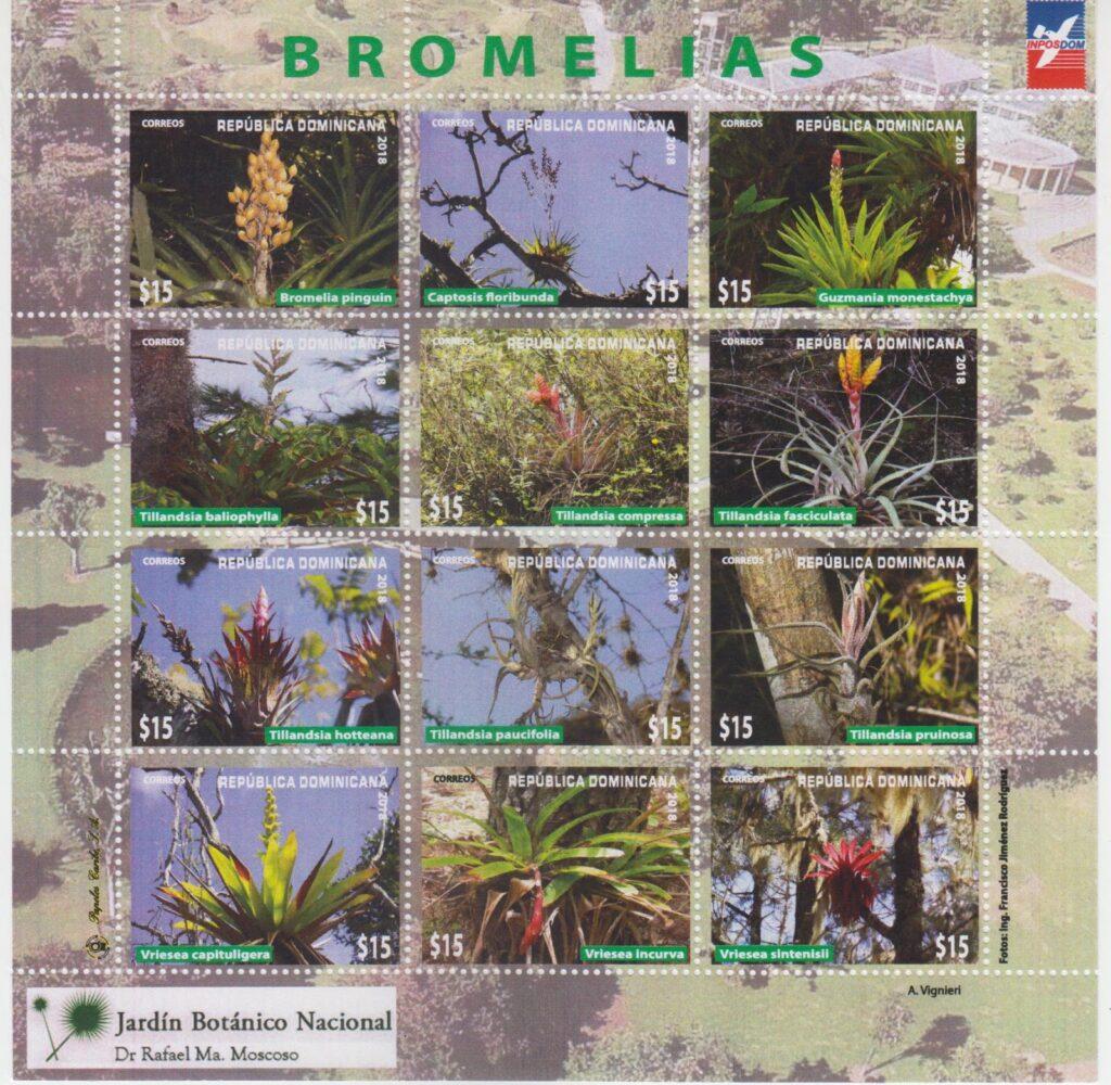 Flora, bromelias